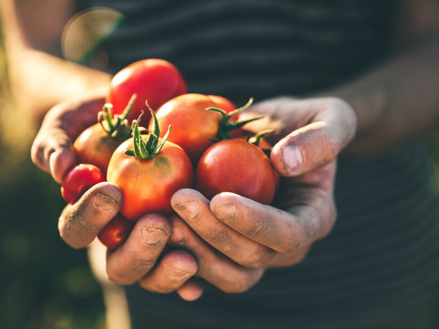 野菜栽培を自宅の庭で始めたので自家製野菜の料理を作りました