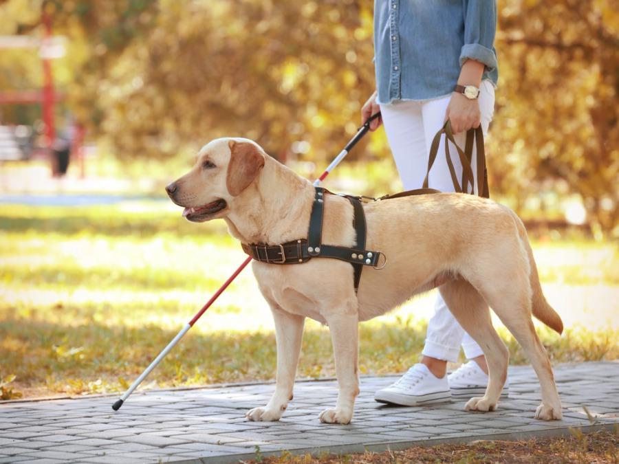 盲導犬訓練士になるために学校に入りました