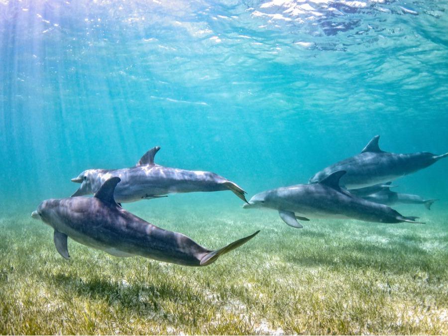 野生のイルカと泳ぐ夢を国内で実現できました