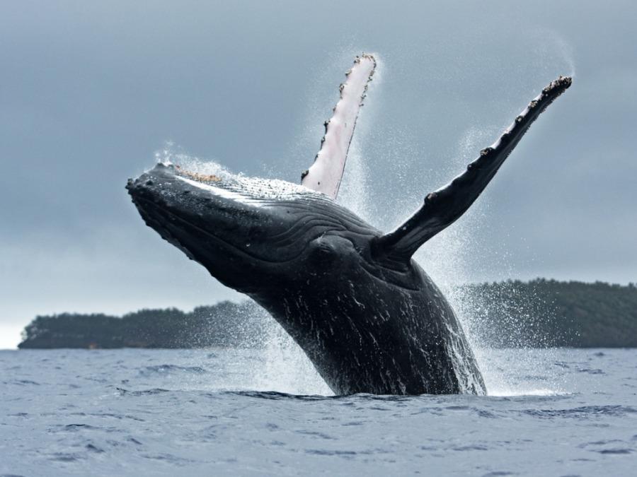 クジラを間近に見て大迫力を体験